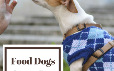 Foods Dogs Crave But Should Never Eat By Ishmeet Chandiok