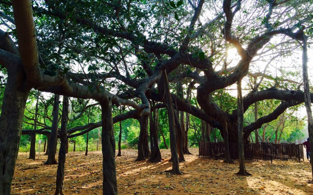 Where to go in South India for Vacation